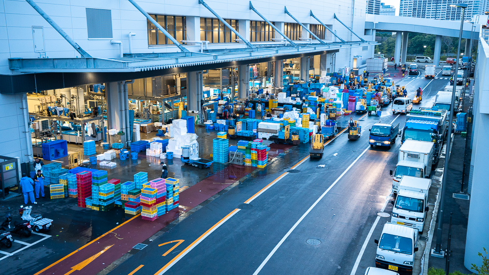 Early in the morning in Toyosu fish market