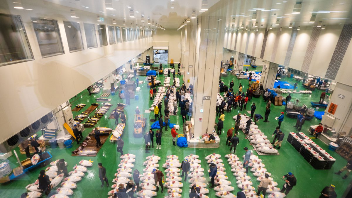 Toyosu fish market In Toyosu Fish Market