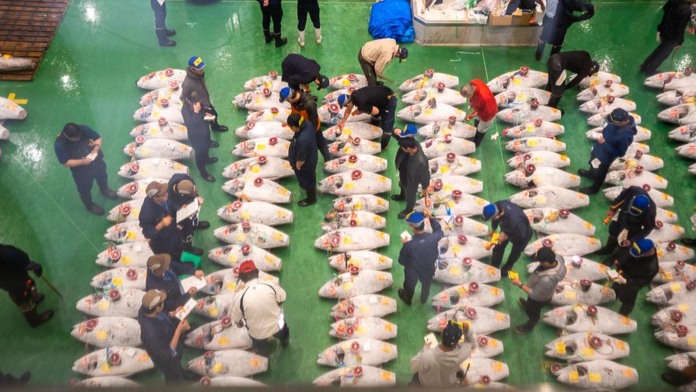Tuna auction @Toyosu fish market