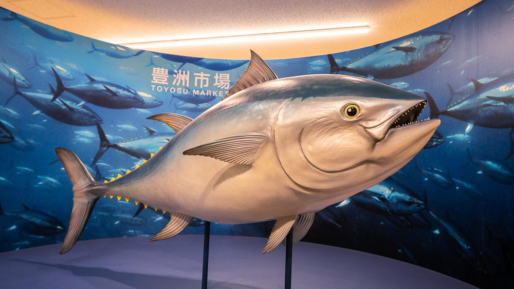 Entrance of tuna auction In Toyosu Fish Market