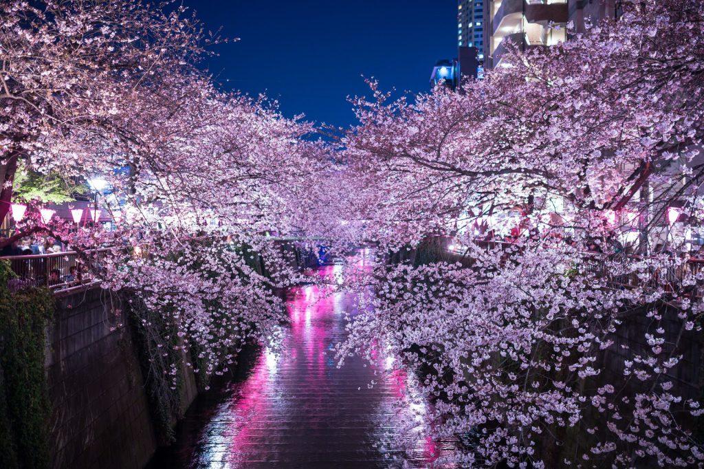 night hanami