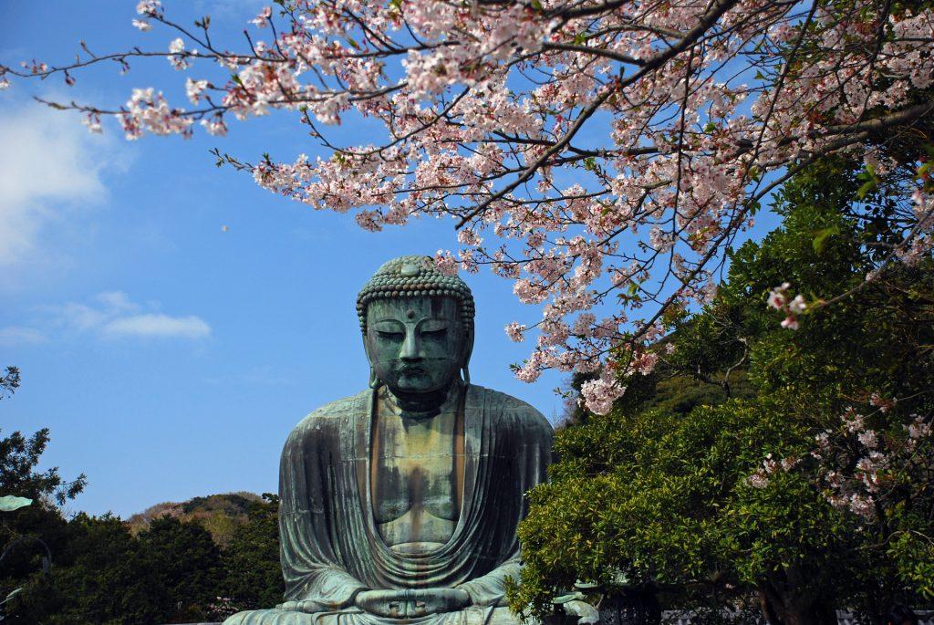 sakura in kamakura