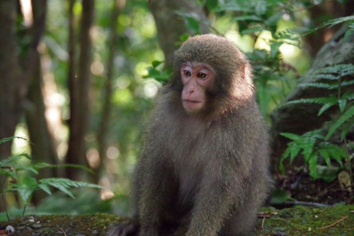 Yaku-Monkey