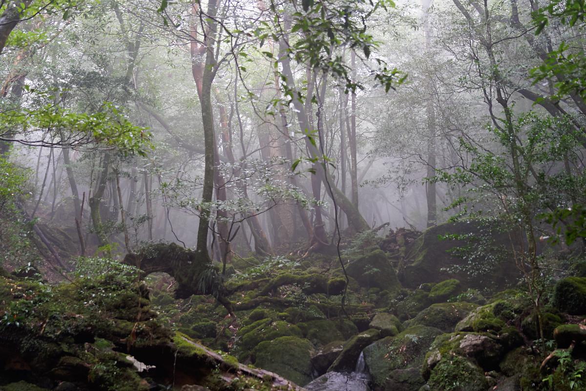 Mist in the Shiratani Unsuikyo Ravine