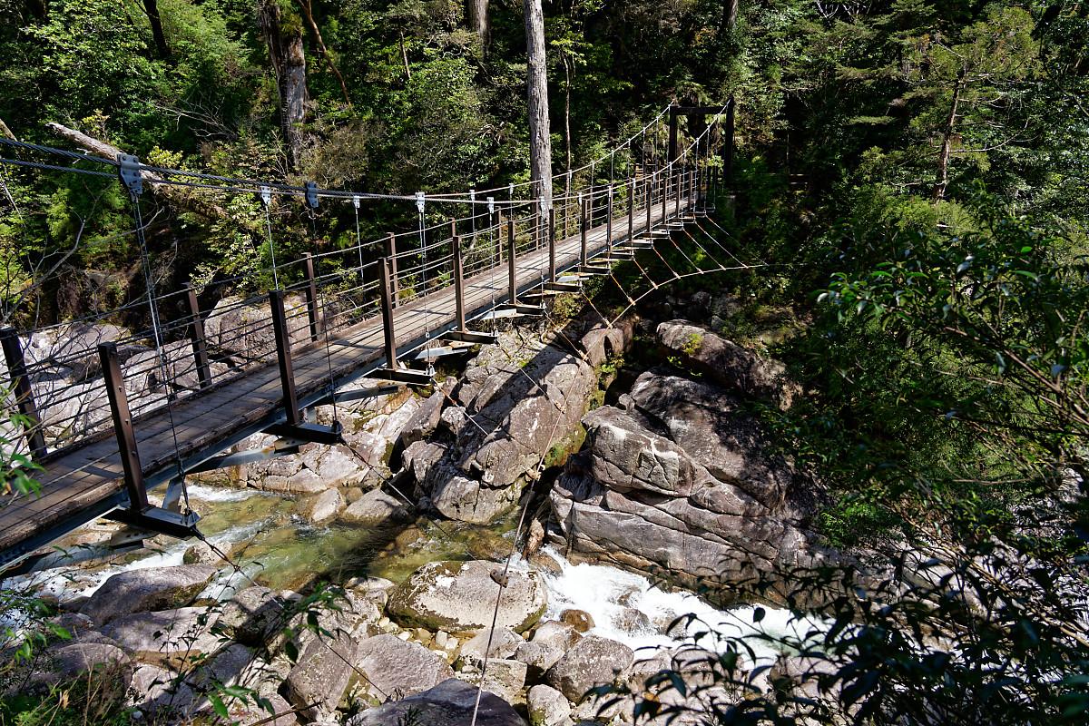 Bridge in Yakusugi Land
