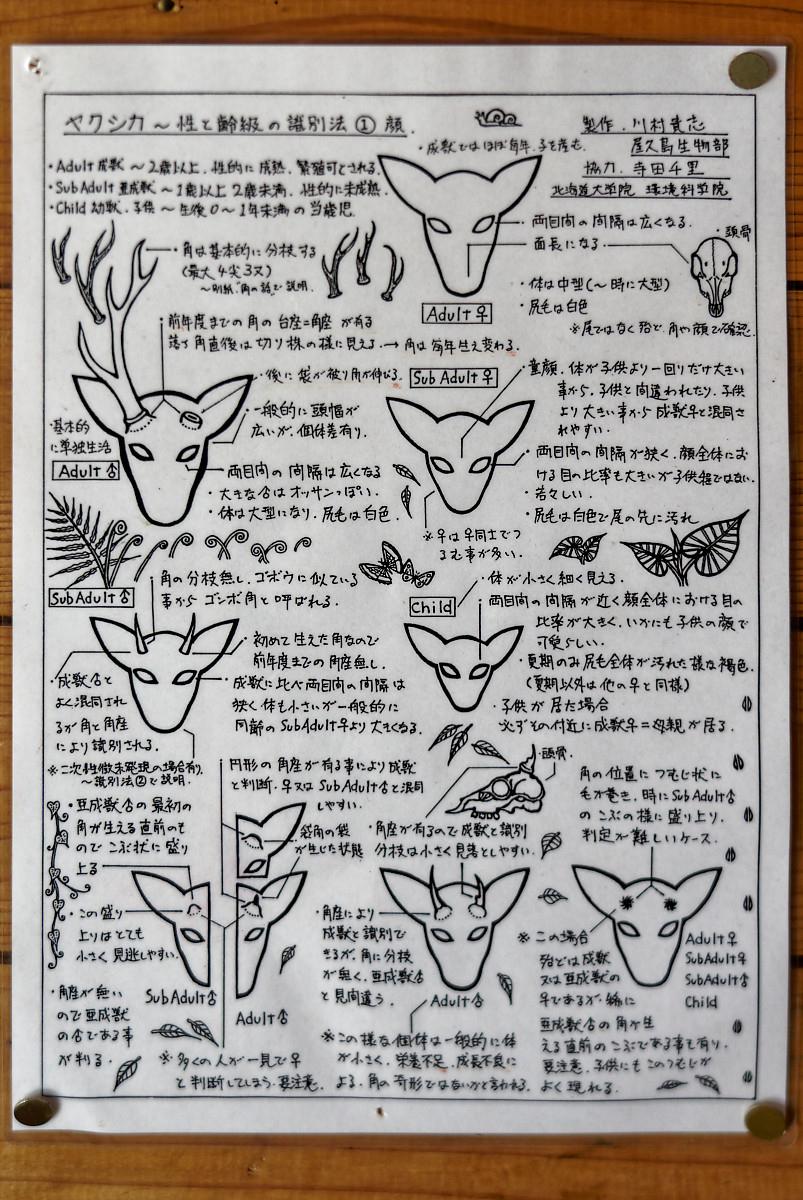 Yaku-Shika Information Sheet (in Japanese) at Yakusugi Land